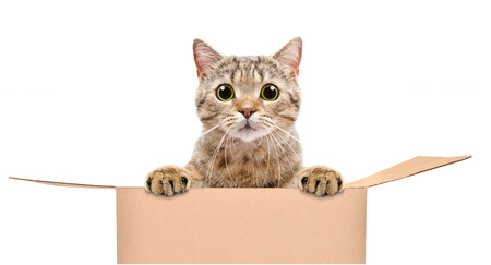 Portrait of a funny cat looking out of the box Banco de Imagens - 126325956