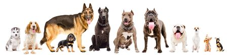 Group of cute dogs isolated on white