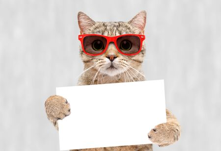 Cat in red sunglasses with a banner in paws Stock Photo