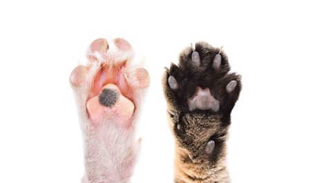 Paws of cat and dog together Stock Photo