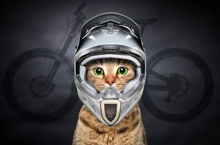 Cat in cycling helmet Stock Photo