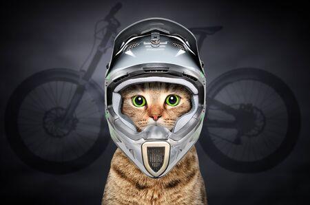Cat in cycling helmet Banco de Imagens - 126327064