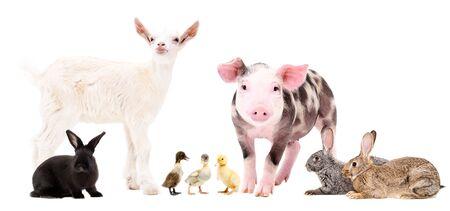 Group of cute farm animals Banco de Imagens - 126327061