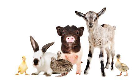 Funny farm animals together