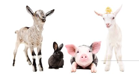 Cute little farm animals standing together Banco de Imagens - 127250768