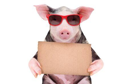 Porträt eines süßen Schweins mit einem Pappschild