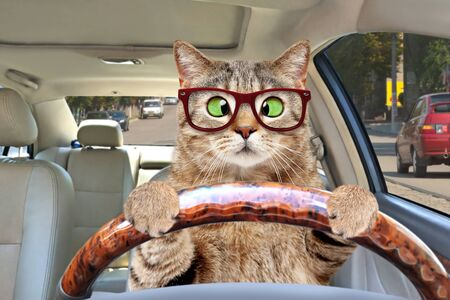 Cat with glasses driving a car