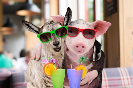 Pig and goat in sunglasses hugging while sitting in a cafe with cocktails Banco de Imagens