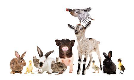 Group of funny farm animals together isolated on white