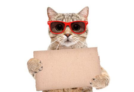 Portrait of a cat Scottish Straight in red sunglasses with a carton banner in paws isolated on white Stockfoto