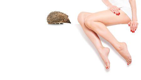 Cute hedgehog near beautiful slim female legs sitting at banner. Epilation concept.