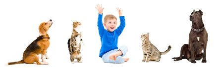 Group of a cheerful child and playful pets together isolated on white 写真素材