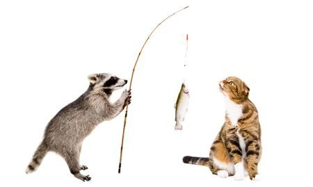 Cat and raccoon with a trout caught on a fishing rod, isolated on white background 版權商用圖片