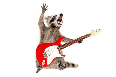 Funny singing raccoon with electric guitar isolated on white