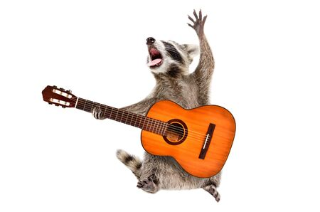 Funny singing raccoon with acoustic guitar isolated on white background