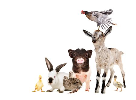 Funny farm animals isolated on white background Banco de Imagens