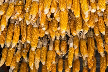 hanged: Hanged Dried Corn