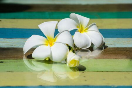white Plumeria on wooden table with space for text photo