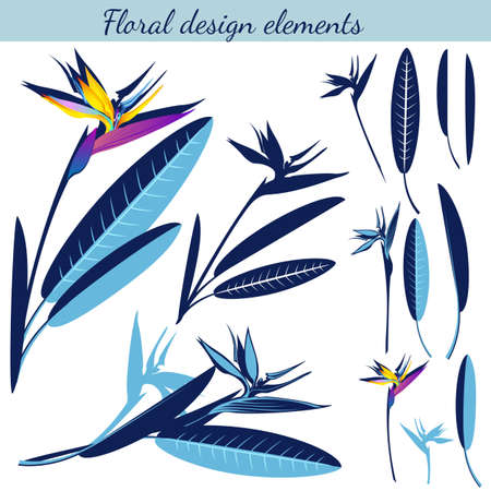 Set of exotic tropical flowers strelitzia. Vector image of white background.