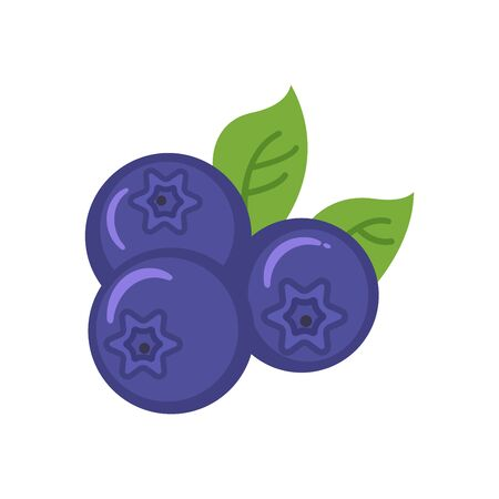 flat icons for blueberry,fruit,vector illustrations