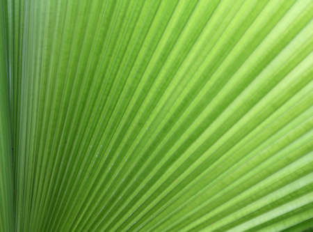 Close-up picture of palm leaf Stock Photo - 10025356