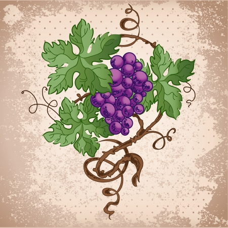 Illustration of grapes on grunge background. Vector