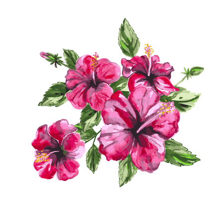 Hibiscus watercolor painting. Isolated vector object. Vettoriali