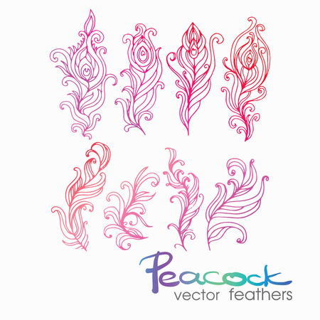 Set of Vintage Hand-Sketched Elements.Ornate peacock feathers for Summer and Retro Design. Hand Drawn Style Vector