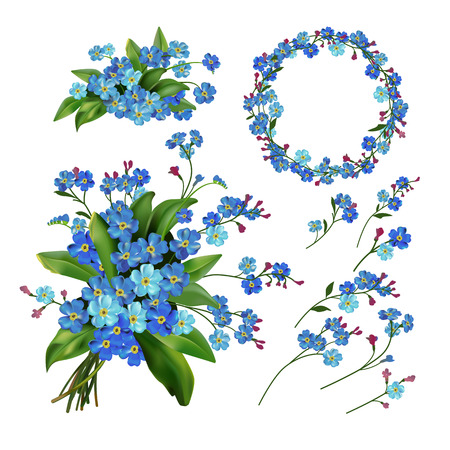 forget me not: The set of Forget-me-not flowers. Spring vector illustration.?
