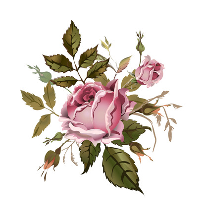 pink vintage: Vintage pink rose. Isolated on white. Vector Illustration. Can be used as greeting card, invitation card for wedding, birthday, scrapbooking, textile and for other design projects. Illustration