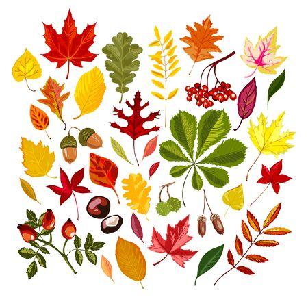Set mit bunten stilisierten Blättern im Herbst. Vektor-Illustration.