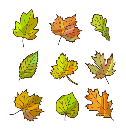 Autumn or fall leaves set, isolated on white background. Cartoon flat style. Vector illustration.