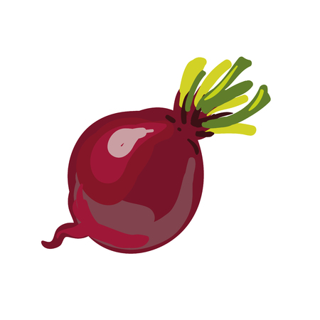 beetroot: Red beetroot whole isolated on white background. Vector Illustration. Illustration