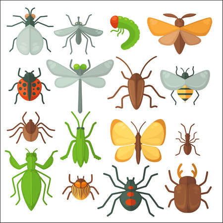 mantis: Set of various insects: butterfly, fly, beetle, dragonfly, spider, bee and ladybug. Vector illustration isolated on white background