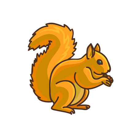red squirrel: Red Squirrel cartoon drawing. Vector illustration. Isolated on white.