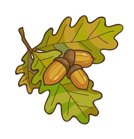 Bellota en la rama de roble con hojas. Ilustración del vector. Aislado en blanco.