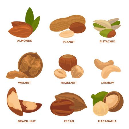 nueces maduras y las semillas de la ilustración del vector. Altamente detallado iconos de frutos secos.