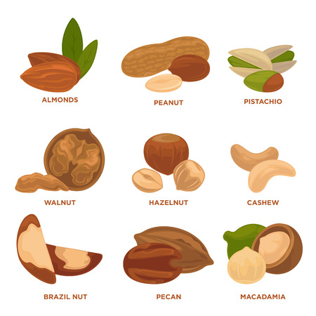 nutshells: Ripe nuts and seeds vector illustration. Highly detailed nut icons.