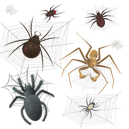 arachnid: Set of spiderweb with spiders. Arachnid insect collection. Vector Illustration on white background