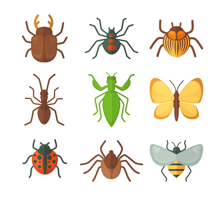 white fly: Set of various insects: butterfly, fly, beetle, dragonfly, spider, bee and ladybug. Vector illustration isolated on white background