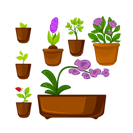 indoor garden: Pots plants with flowers and leaves set. Vector illustration. Isolated on white. Illustration
