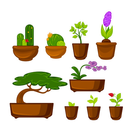 stems: Pots plants with flowers and leaves set. Vector illustration. Isolated on white. Illustration