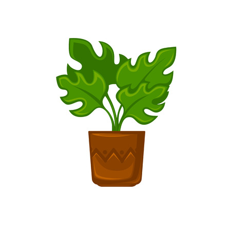flower room: Pot room plant with flower and leave . Vector illustration. Isolated on white. Illustration