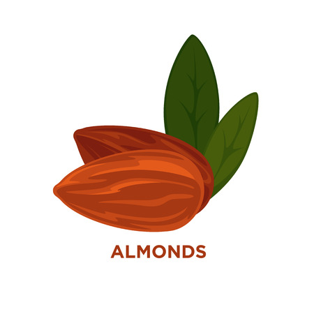 almond: almond nut with leaves vector cartoon illustration. Isolated