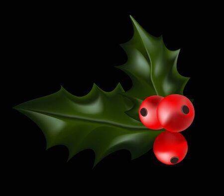 christmas plant: Holly Christmas Plant. Holly berry Christmas Illustration