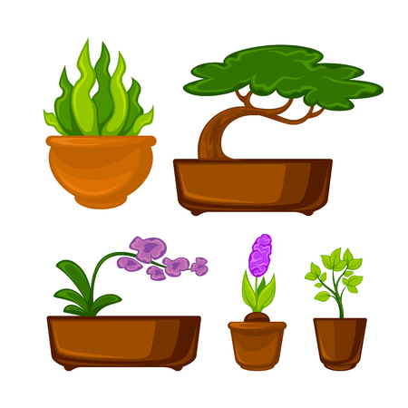 Pots plants with flowers and leaves set. Vector illustration. Isolated on white. Illustration