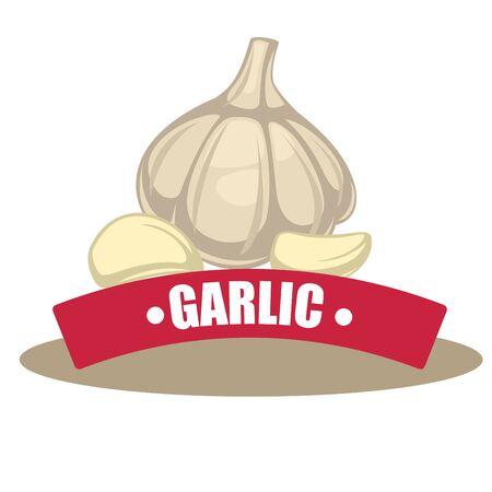 garlic: Ilustración del vector con la rebanada de ajo. Vectores