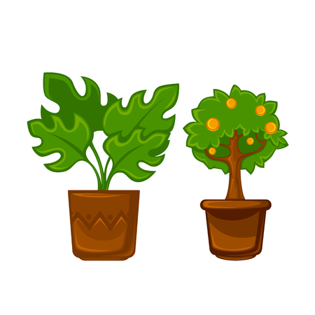 crock: Pots plants with flowers and leaves set. Vector illustration. Illustration