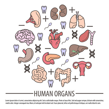human teeth: Human Organs with DNA Parts, Rh factor and Teeth