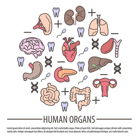 segmento: Órganos humanos con partes de ADN, factor Rh y dientes